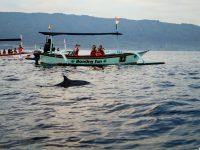 Paket Tur Melihat Langsung Lumba-lumba di Lovina