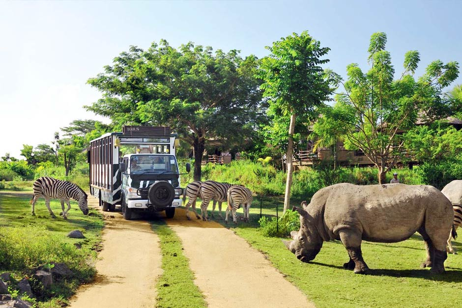 Promo Tiket Bali Safari Untuk Domestik Akhir Tahun 2020   Balitripin.com