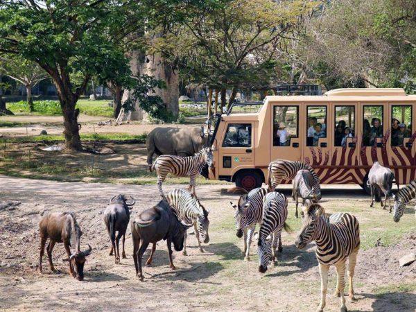 Promo Tiket Bali Safari Untuk Domestik