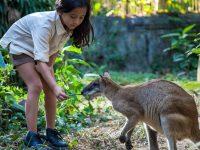 Promo Tiket Bali Zoo Wisatawan Domestik