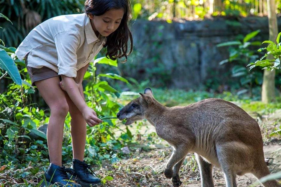 Promo Tiket Bali Zoo Wisatawan Domestik Akhir Tahun 2020 | Balitripin.com